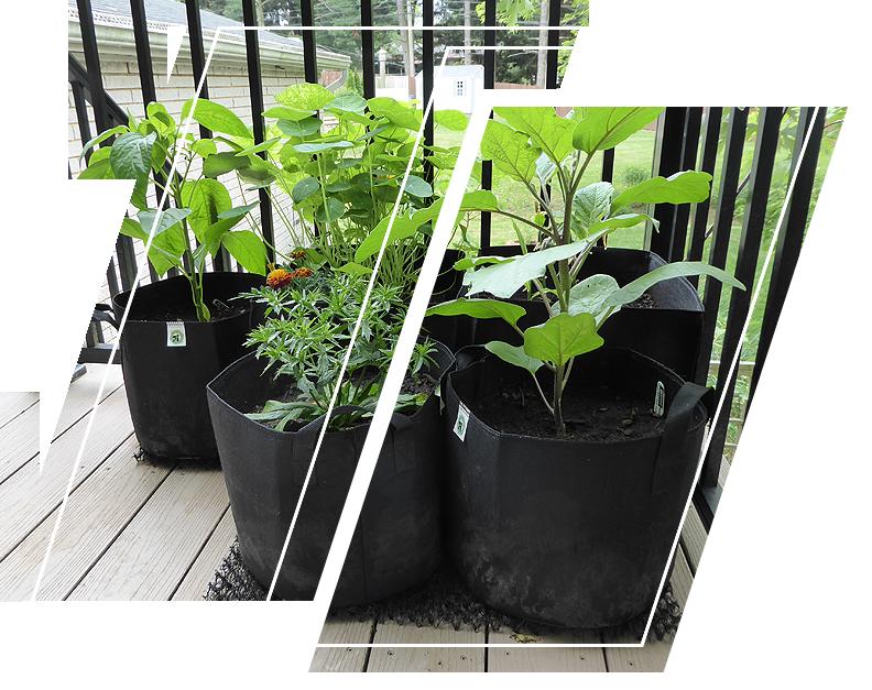 Ecogardener Grow Bags in your balcony