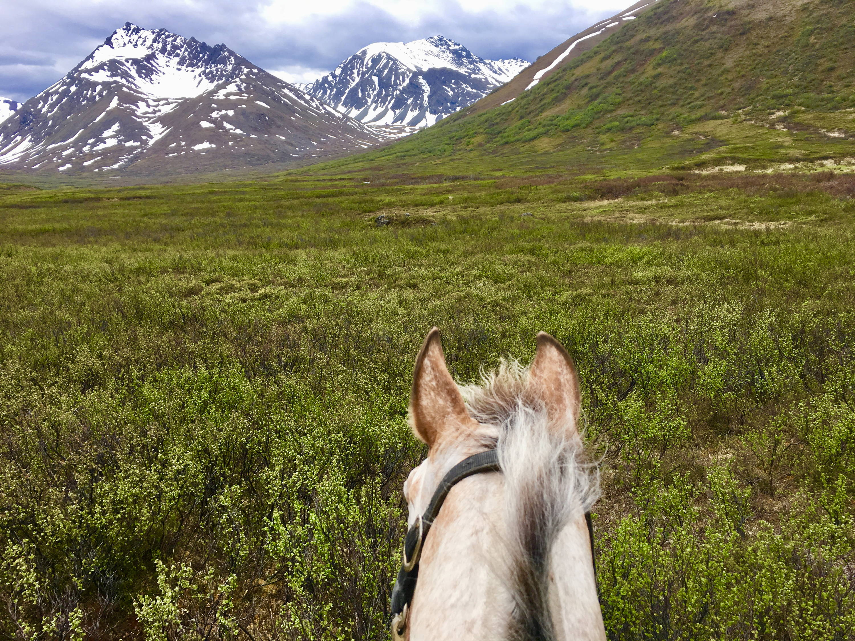 Arctic Horse horse trekking trail riding denali alaska windy creek camping with horses
