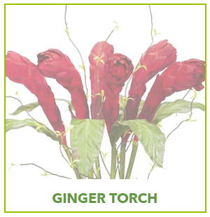 ARTIFICIAL GINGER TORCH PLANTS