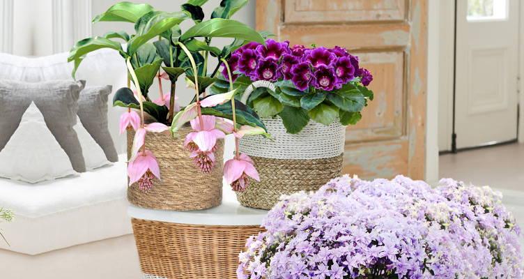 Plantes d'intérieur dans votre maison