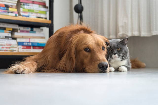 Diabetes in Dogs & Cats