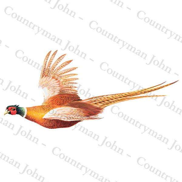 Countryman John Pheasant in Flight Artwork - 1004