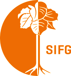 Siam Timber Group - SIFG