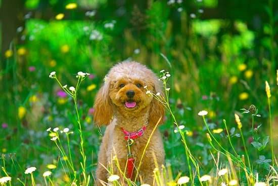 A small brown dog sitting in a tall green grass with small flowers