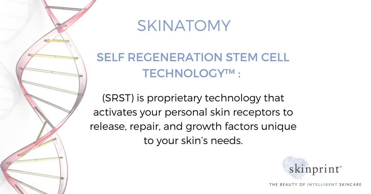 self regeneration stem cell