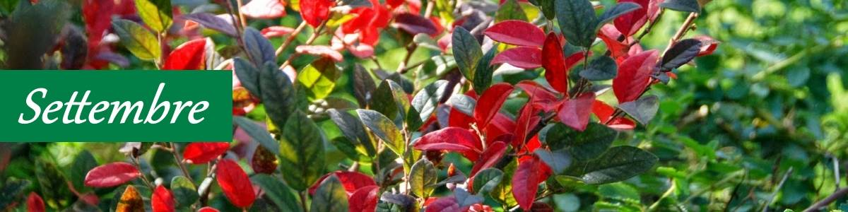 Potatura piante settembre giardino biologico