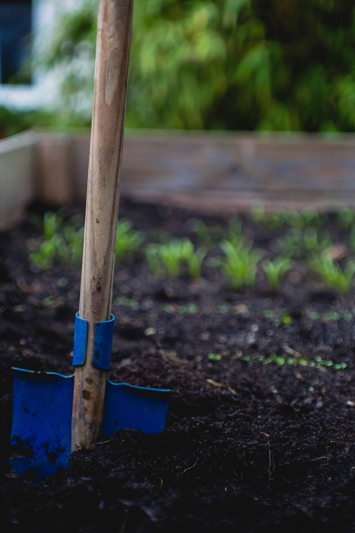 A spade in the soil of a raised vegetable bed