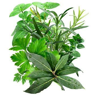High Quality Organics Express Grow Fresh Herbs