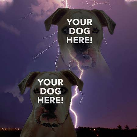 Super Portrait of pitbull on thunder and lightning