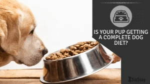 Is your pup getting a complete dog diet?