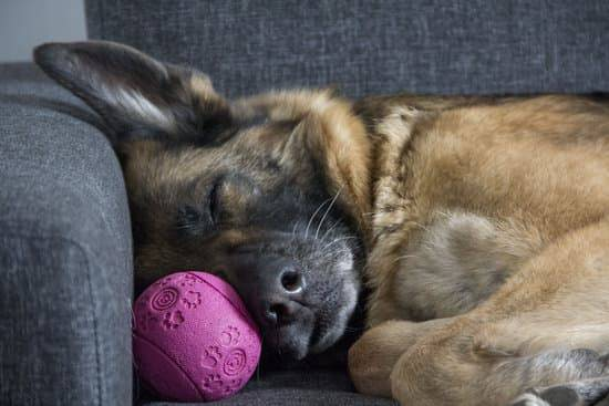a german shepherd sleeping on a grey couch with a pink ball