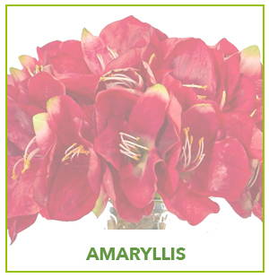 ARTIFICIAL AMARYLLIS PLANTS