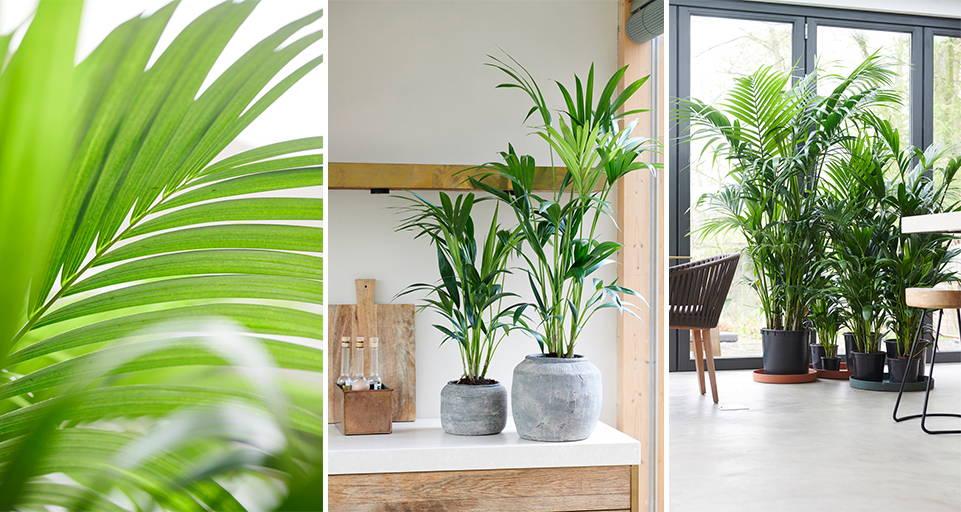 Top 10 Kamerplanten voor buiten
