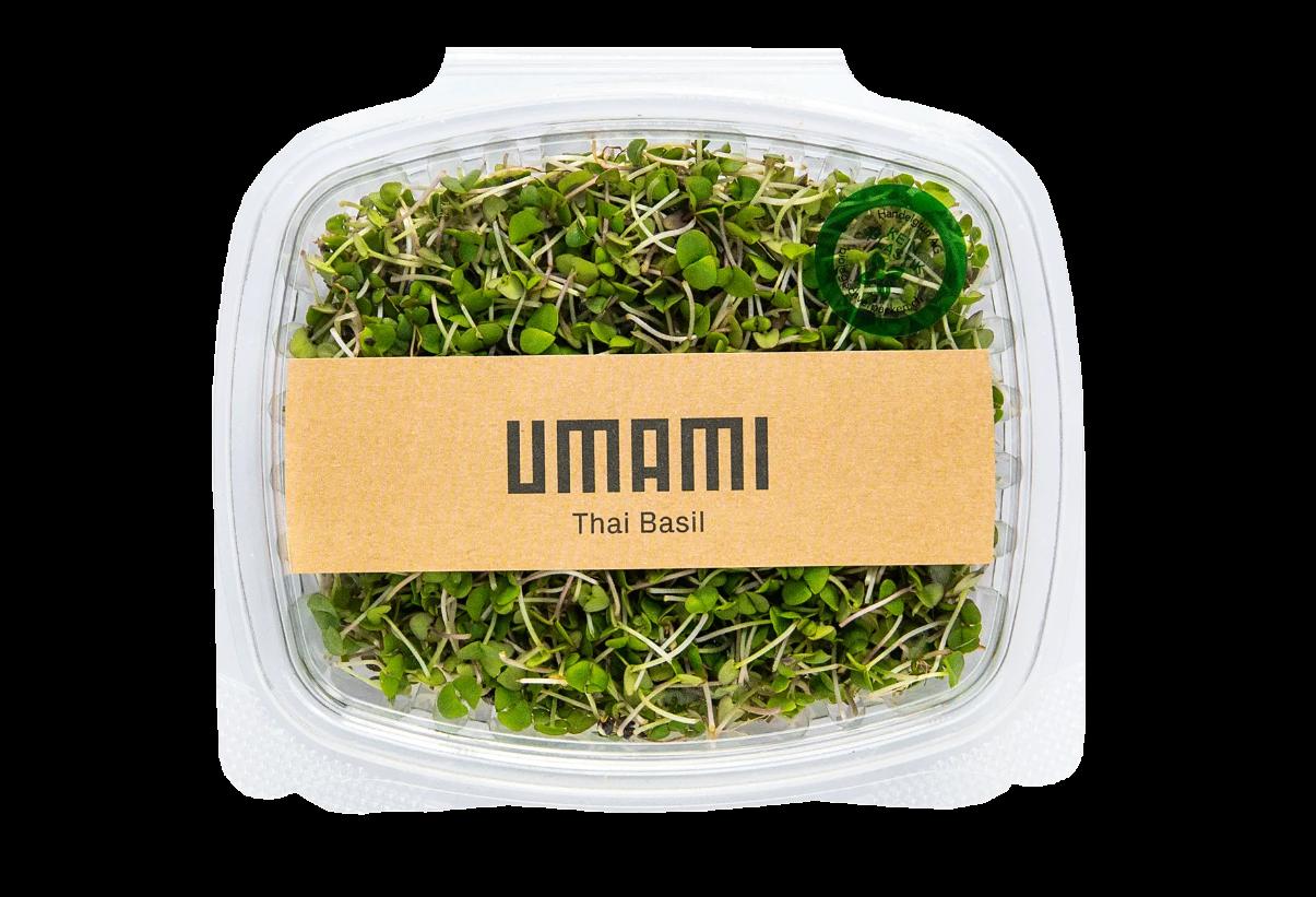Thai Basil Umami Microgreens von der urban Farm in Zürich.