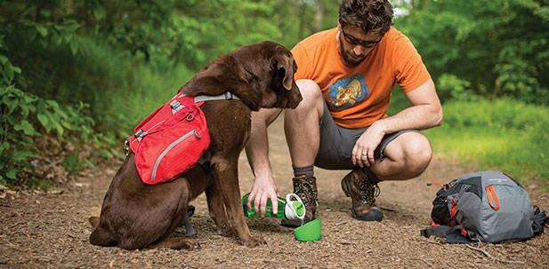 Dog Travel Safety Tips