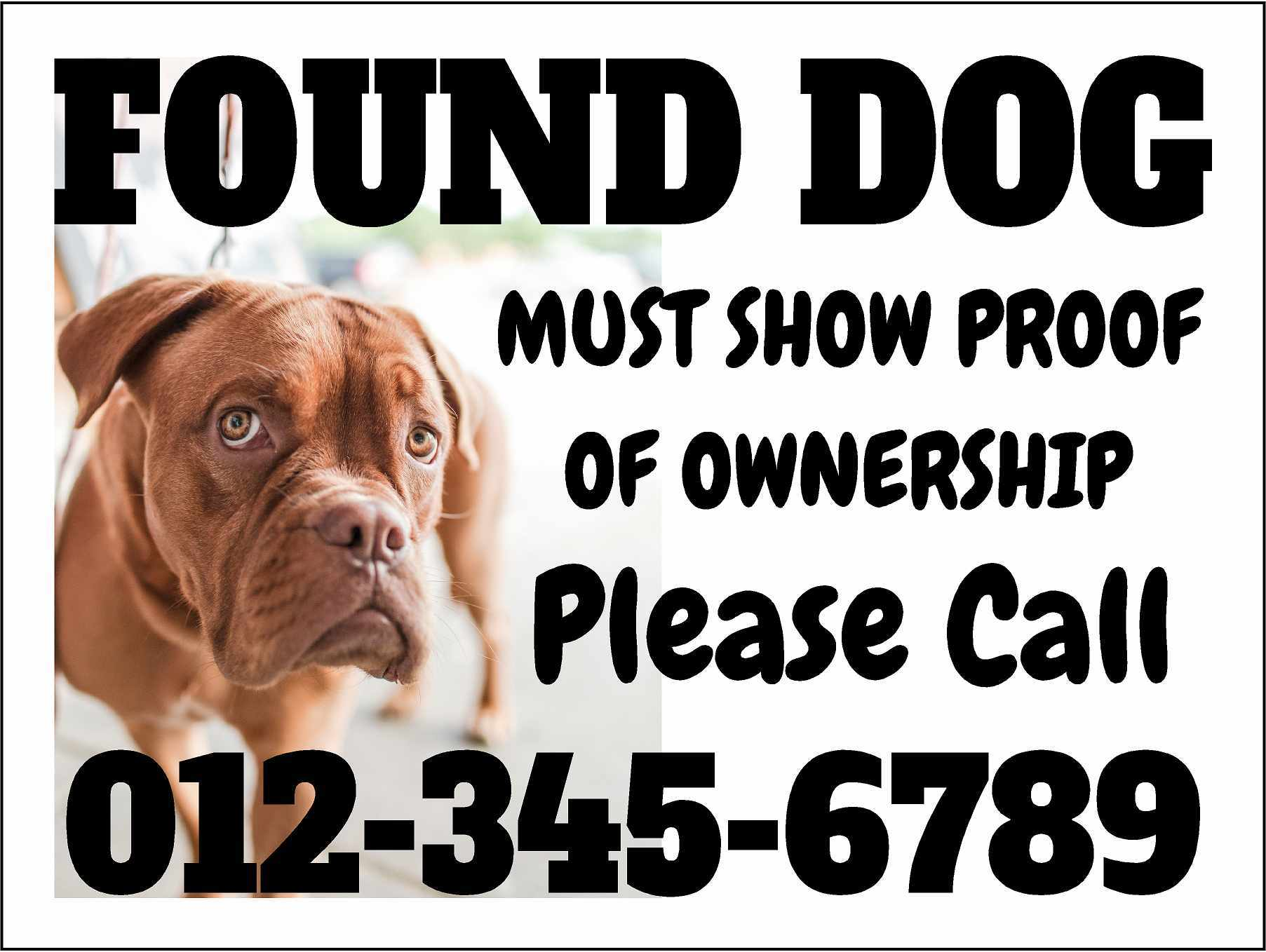 Lost Dog Yard Sign Example
