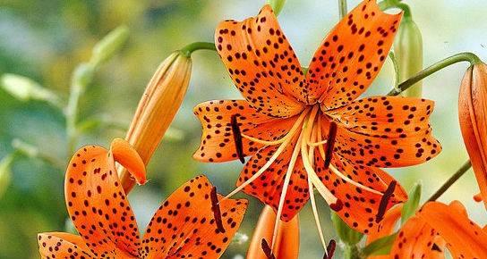 Top 5 most eccentric flower bulbs