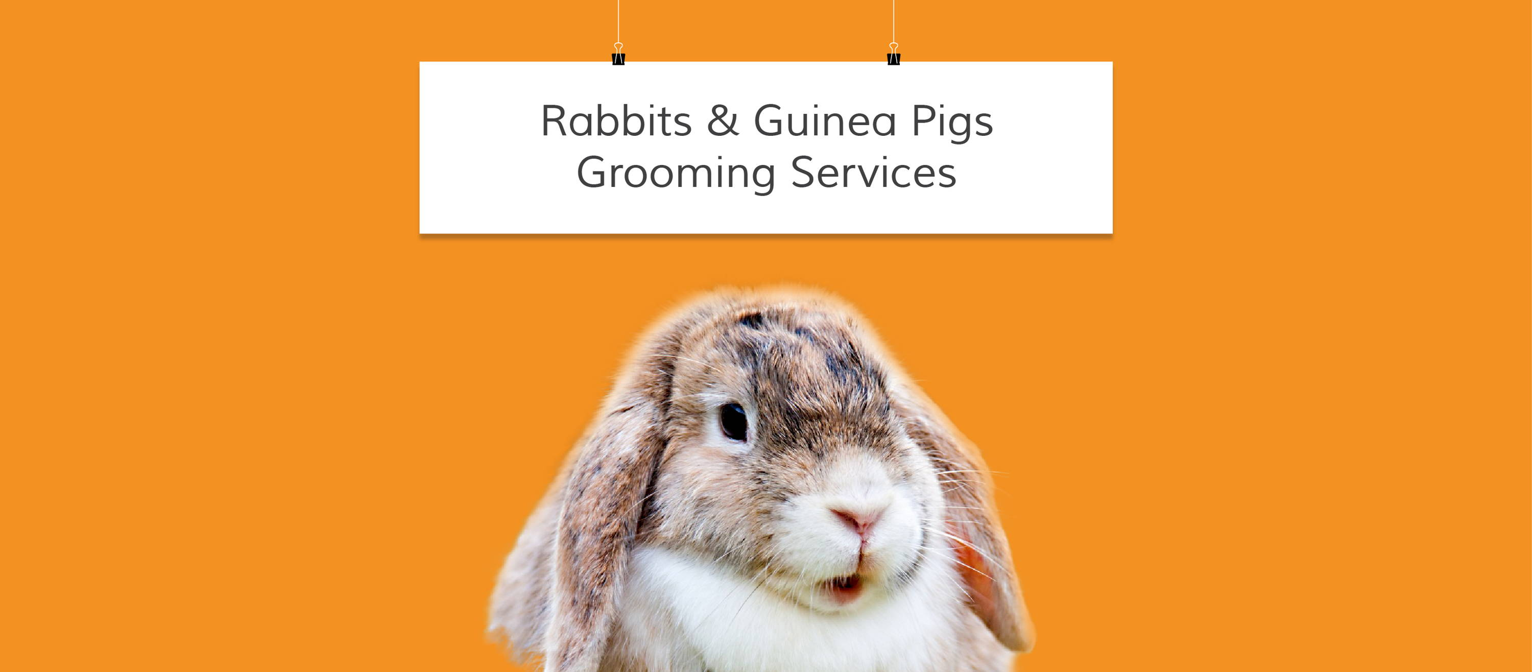 rabbits and guinea pigs grooming services