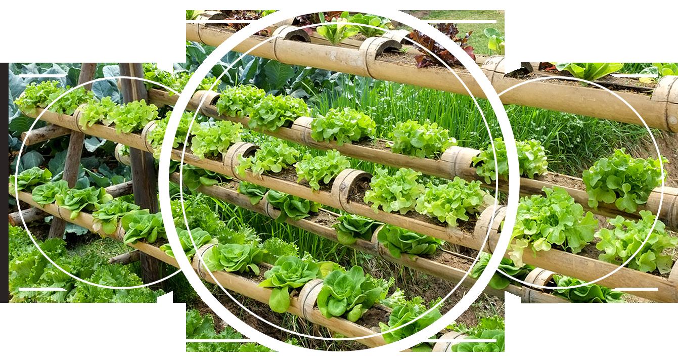 A garden using bamboo as a flower pot