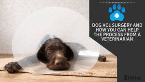 Dog ACL Surgery And How You Can Help The Process From A Veterinarian