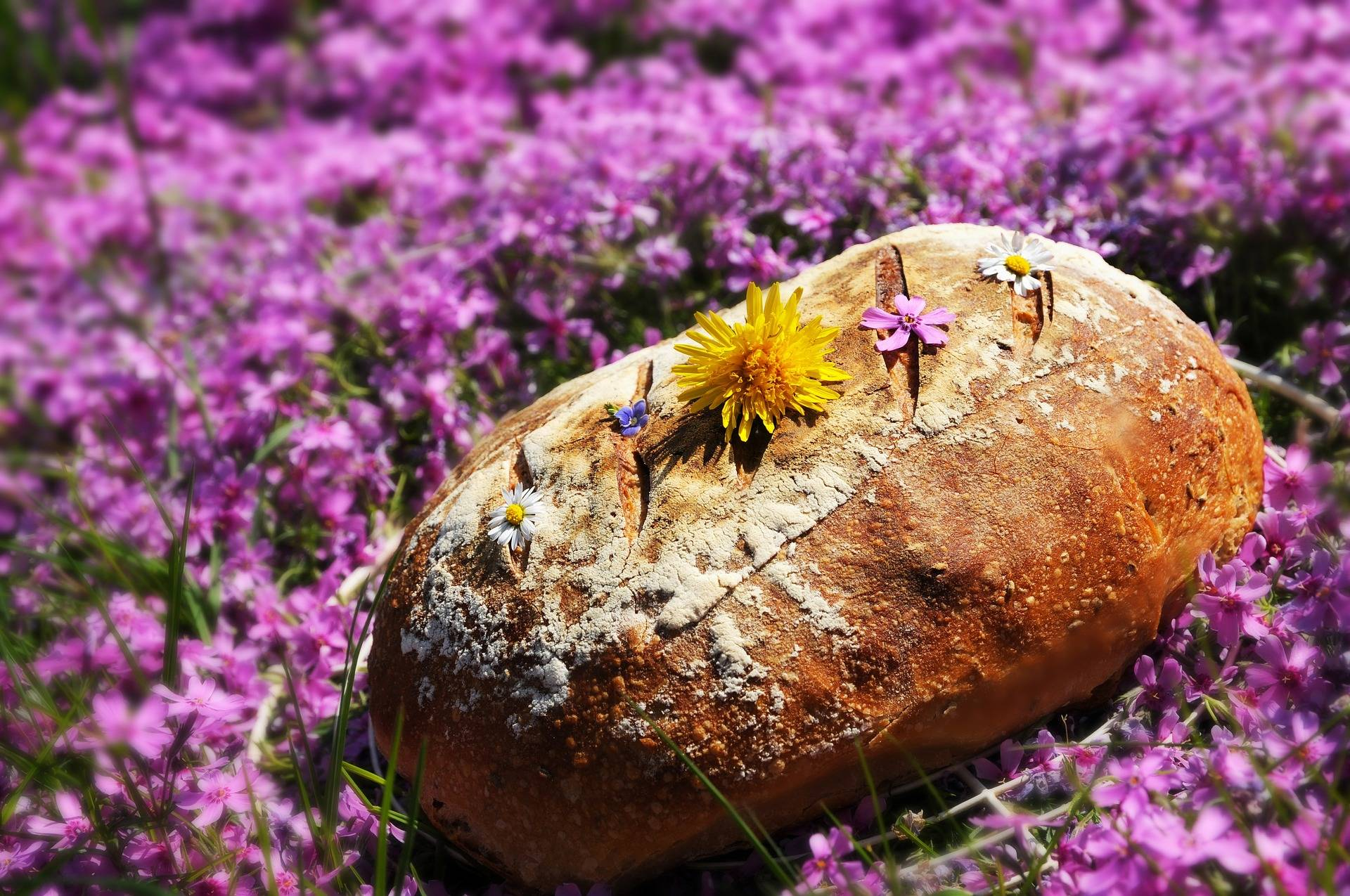 Sourdough Bread in Oval Shape
