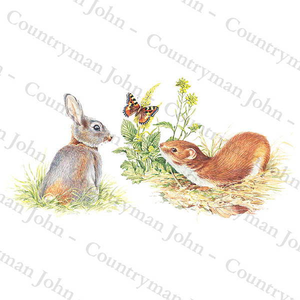Countryman John Rabbit and Stoat Artwork - 1201