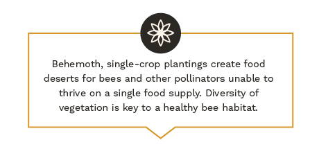 Behemoth, single-crop plantings create food deserts for bees and other pollinators unable to thrive on a single food supply. Diversity of vegetation is key to a healthy bee habitat.