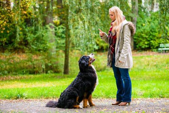 A blonde woman training her big black and tan dog.
