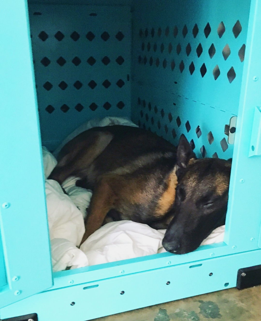 x large teal collapsible impact crate belgian malinois