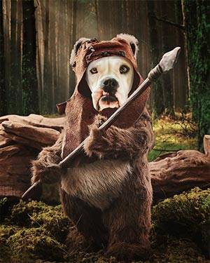 dog in wookie costume