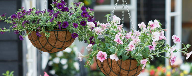 Hanging Baskets - Hangpotten