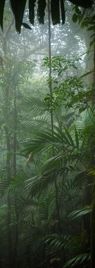 rainforest sustainable