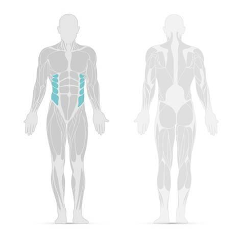 Muscolo addominale esterno obliquo