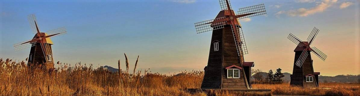 Three wooden windmills in a cereal field. These were the forefathers of modern day green energy.