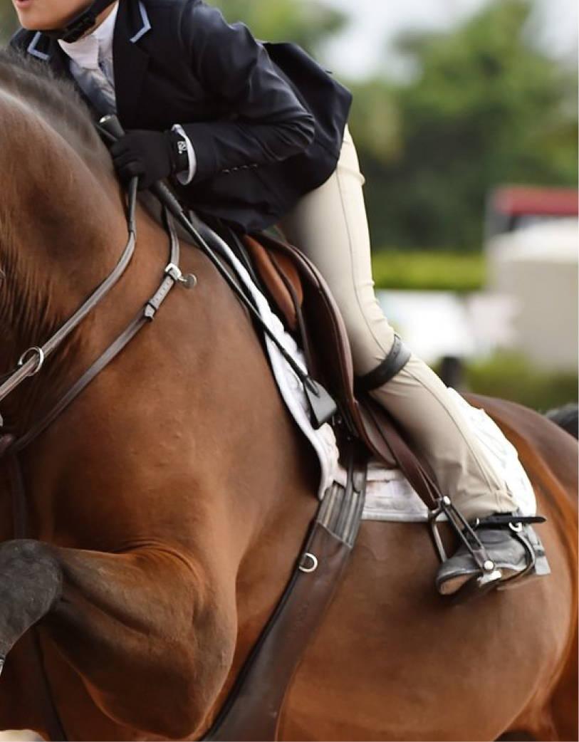 Used Hunter Jumper Saddles for sale