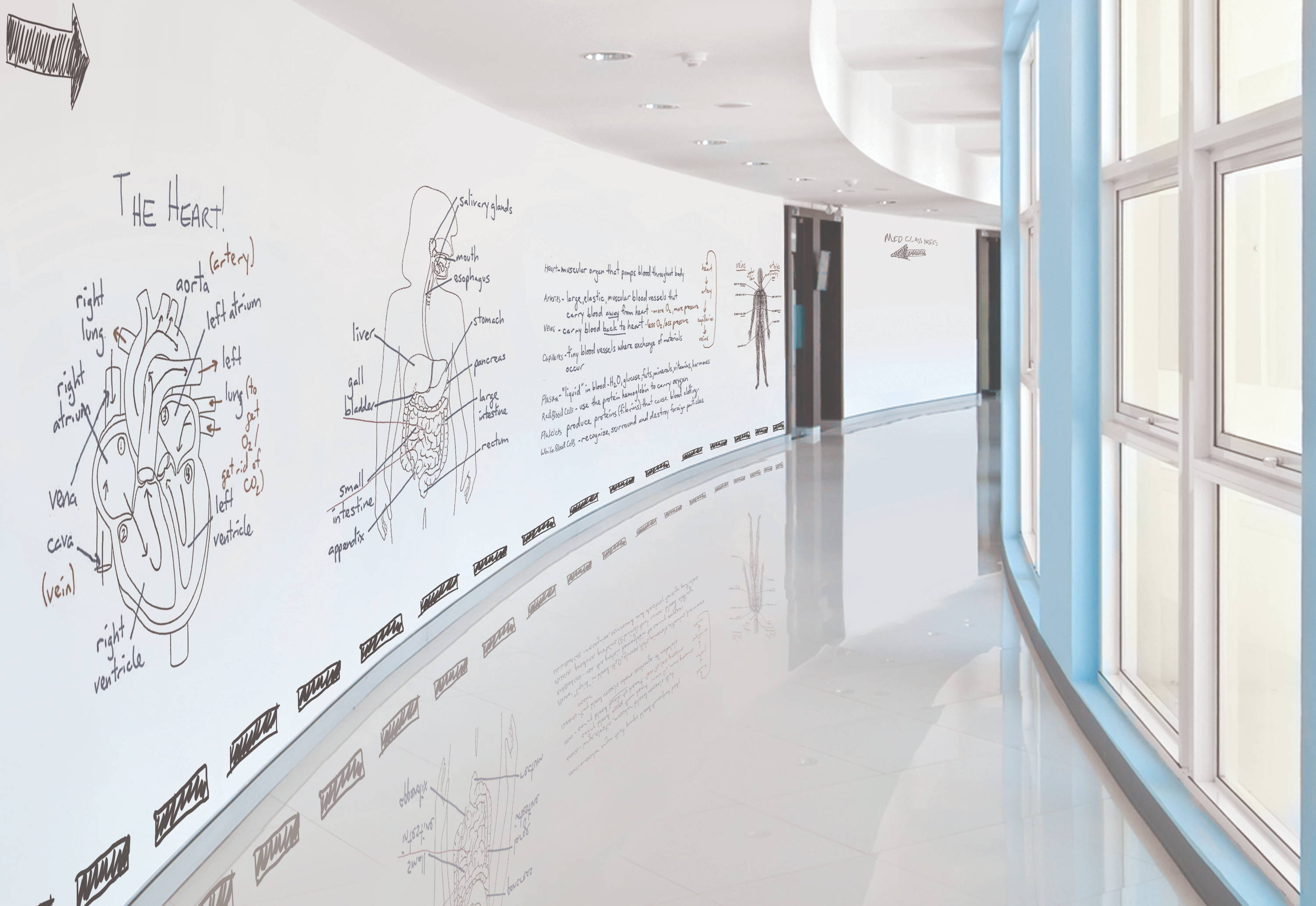 Image of an IdeaPaint dry erase wall in the hallway of a college
