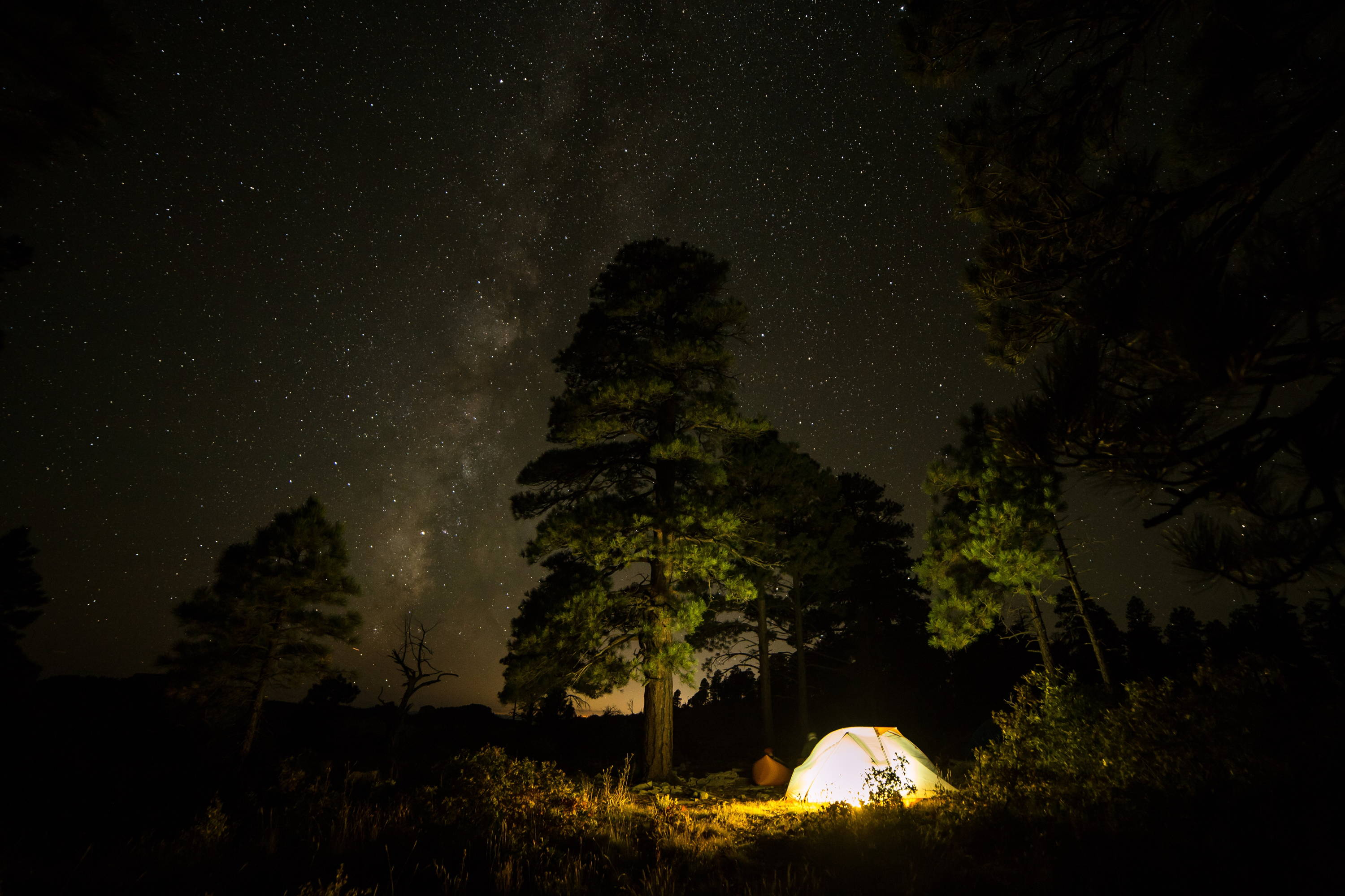 Best Backpacking & Camping Tents 2019. Night starts light up the sky above pine trees and a backpacking tent.