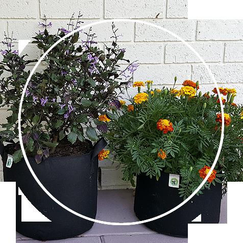 Ecogardener Round Grow Bags in the patio