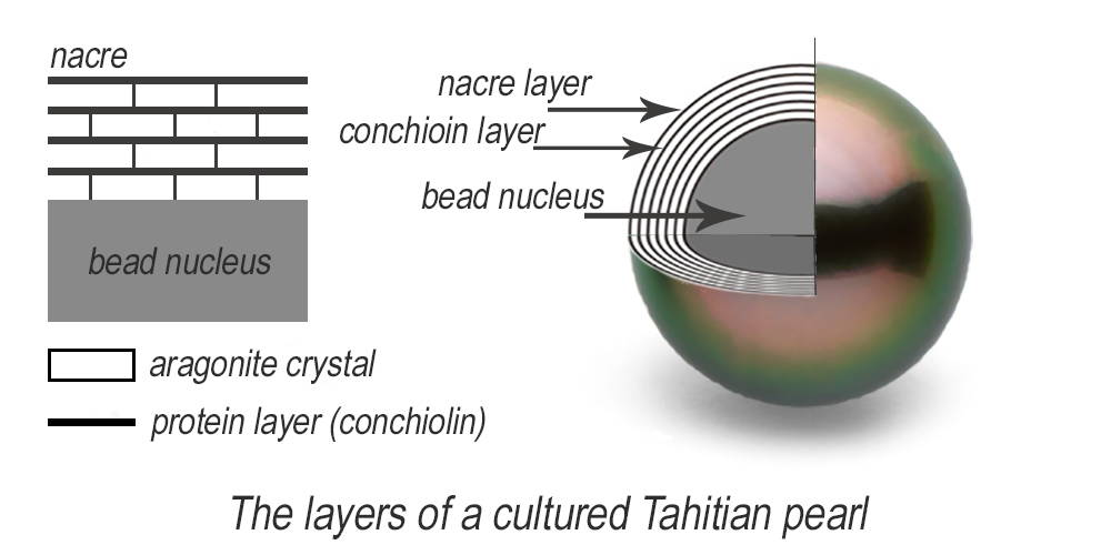 Tahitian pearl cross section nacre layers