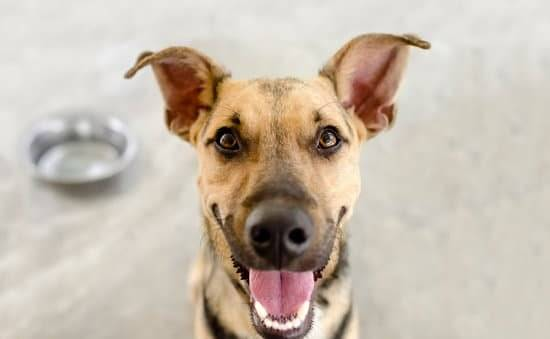 CBD for Dogs: Avet explains the pros and cons shows a happy brown dog