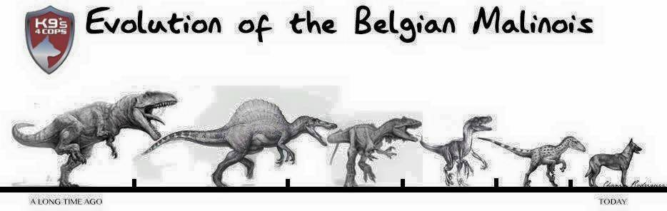 Evolution of the Belgian Malinois graphic