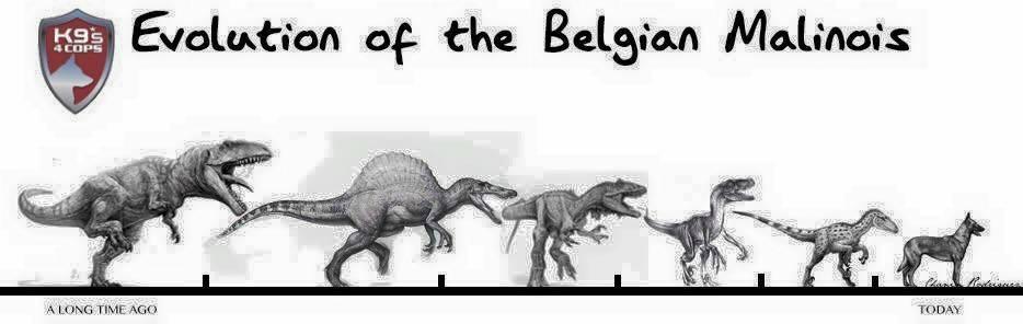 Evolution of the Belgian Malinois graphic