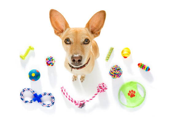 A dog sits on white background surrounded by various toys