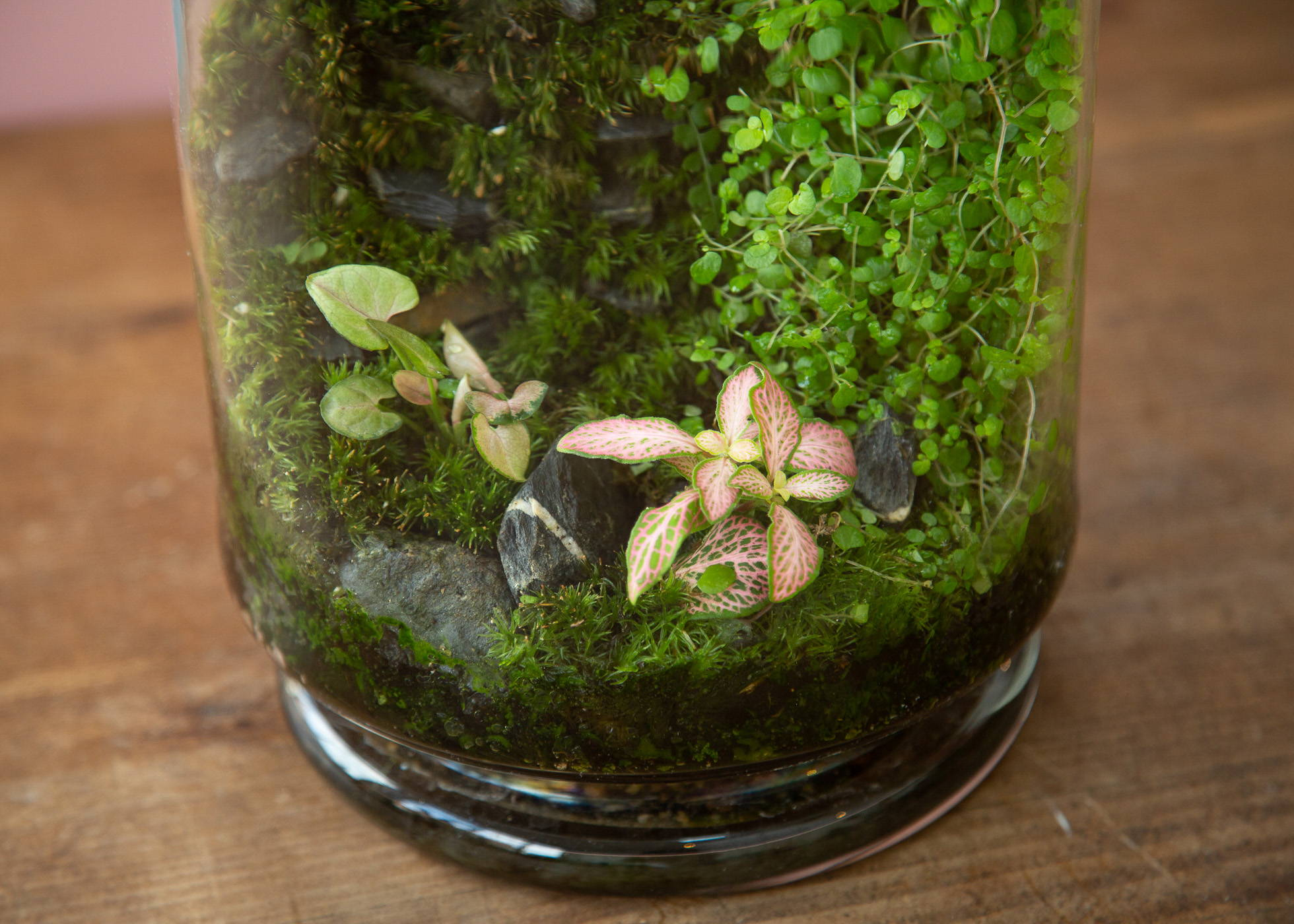 Closed Terrariums Care The Watered Garden