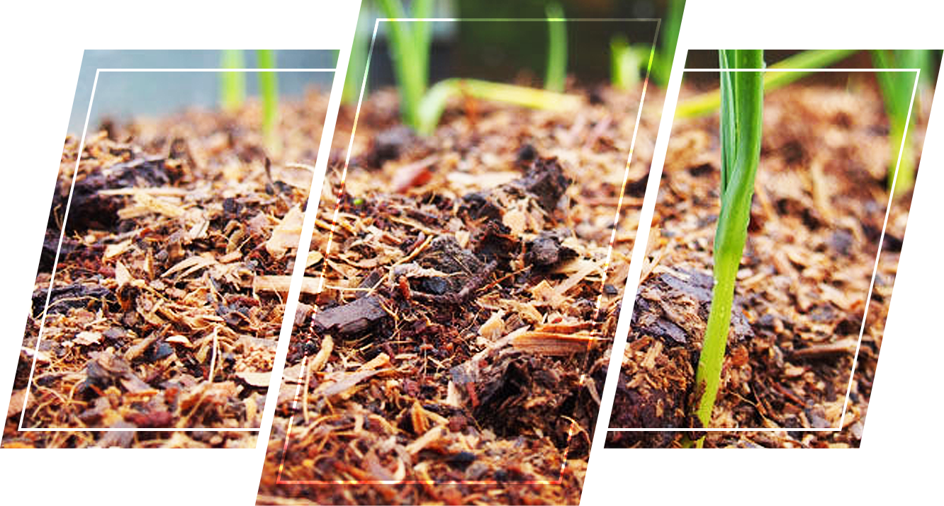 Wood chips on the soil