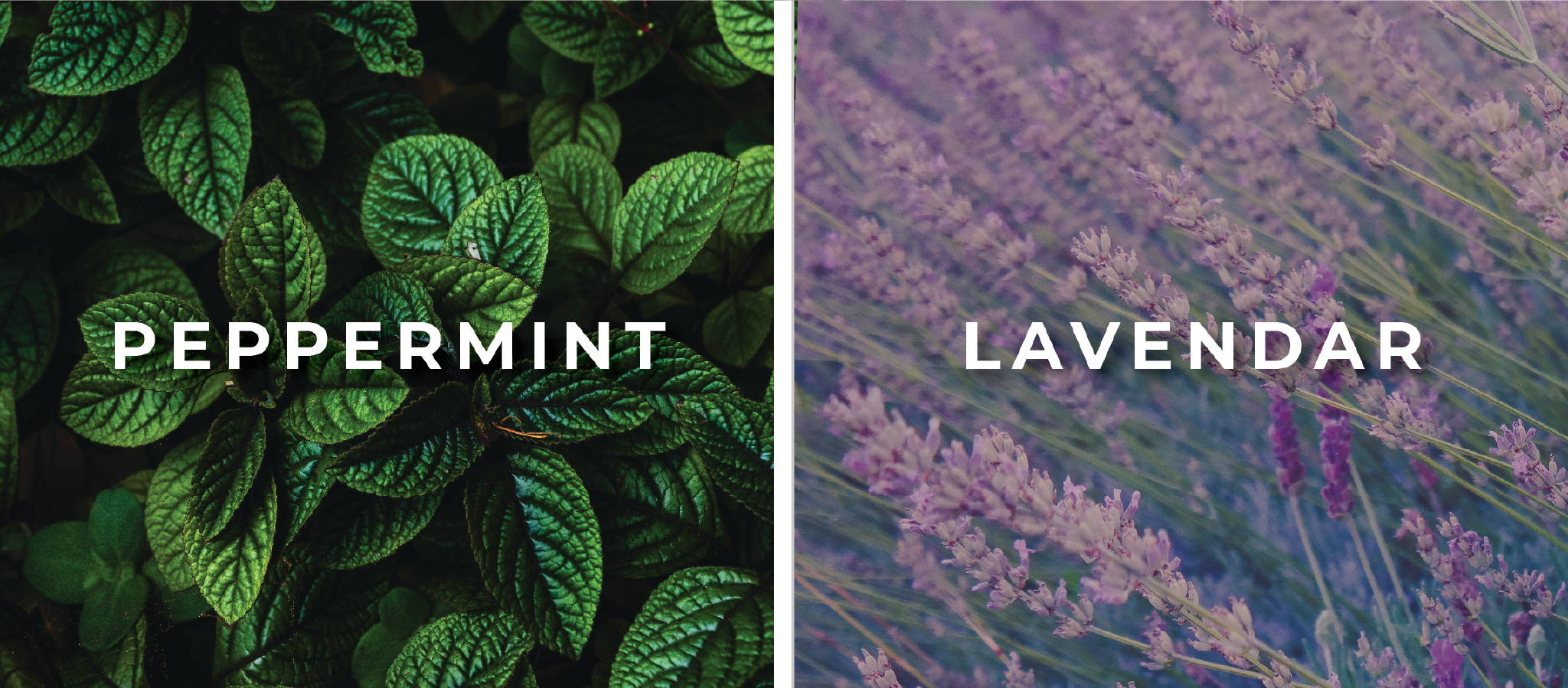 Caffeine-free Peppermint and Lavendar Tea