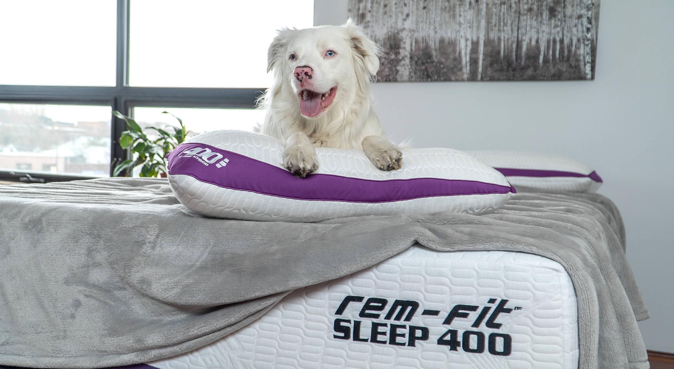 Pillow Finder REM-Fit dog on 400 hybrid down cooling pillow. on REM-Fit 400 advanced cooling mattress