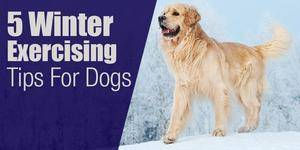 Winter exercise tips for dogs