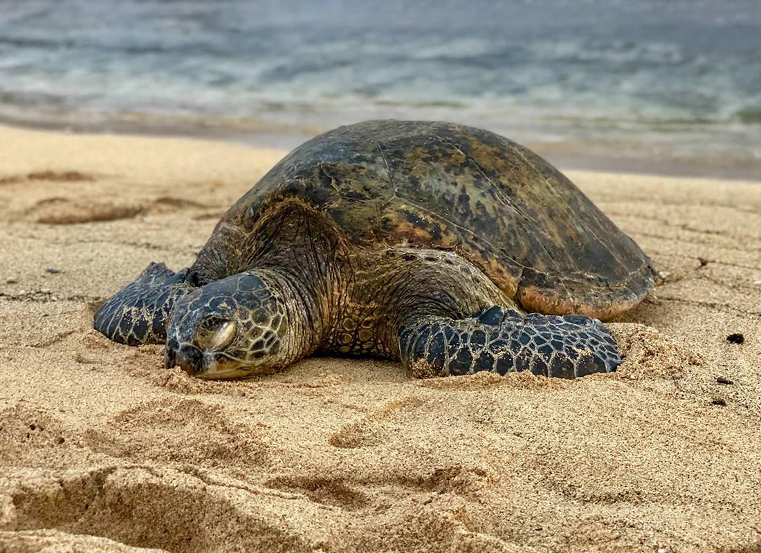 San Diego sea turtle