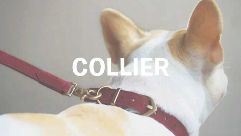 inooko-collier-original-chien